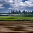 Israeli village of Sde Varburg - Stock Photo