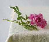Small pink roses — Stock Photo