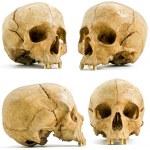 Human skull — Stock Photo #2230362
