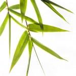 Bamboo leafs — Stock Photo