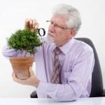 Senior man inspecting a small tree — Stock Photo #2237553