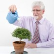 Senior man watering a small tree — Stock Photo
