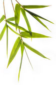 Bamboo leafs — Stock Photo