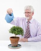 Senior man watering a small tree — Stock Photo