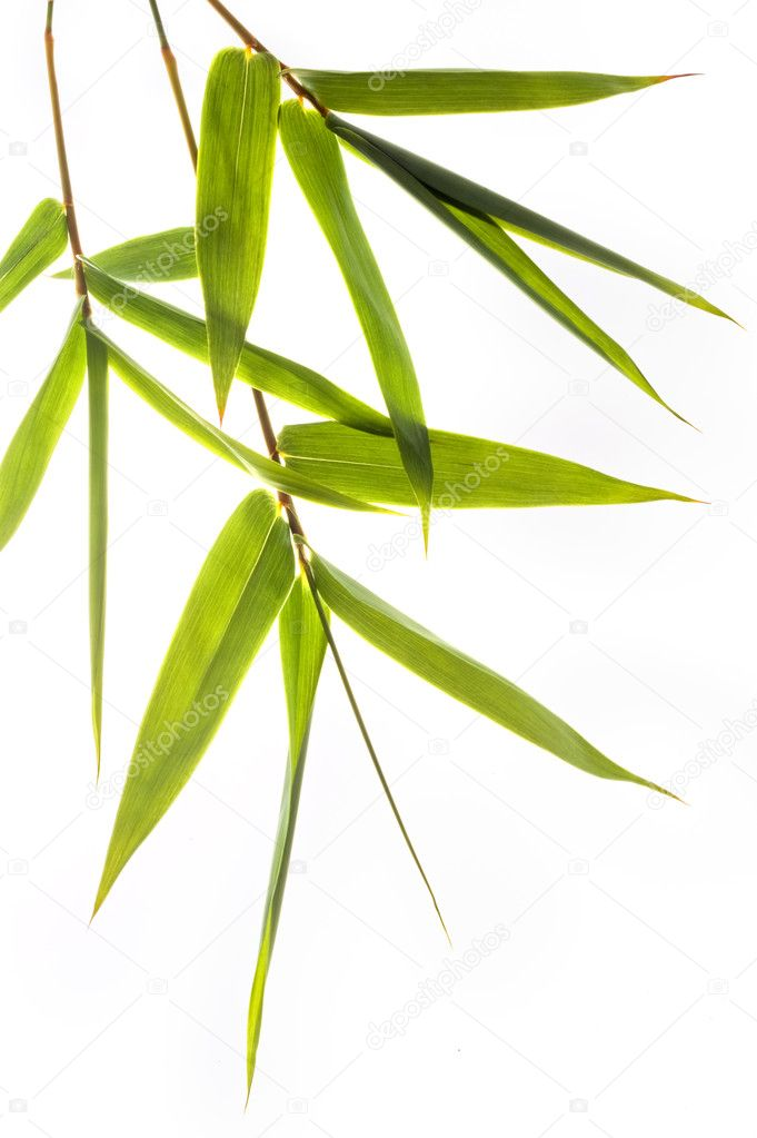 Bamboo leafs isolated on white — Stock Photo #2236170