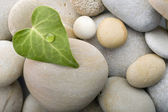 Heart leaf pebbles background — Stock Photo