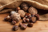 Chestnuts and hazelnuts — Stock Photo