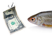 Fish and dollar — Stock Photo