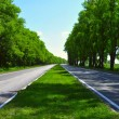 Stock Photo: Wide Road