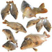 Isolated Fresh Carp — Stock Photo