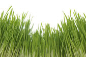 Enormous green grass — Foto Stock
