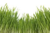 Enormous green grass — Stock Photo