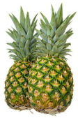 Two whole pineapple — Stock Photo