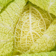 Stock Photo: Cabbage as background of bends