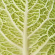 Stock Photo: Cabbage as texture of bends