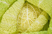 Cabbage as background of bends — Stock Photo