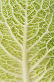 Cabbage as texture of bends — Stock Photo
