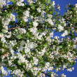 Stock Photo: Apple-tree in color 2