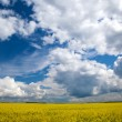 Stock Photo: Cloudy landscape 2