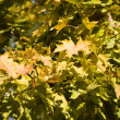 Autumn leaves in tree nurseries 3 — Stock Photo