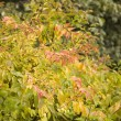 Autumn leaves in tree nurseries 6 — Stock Photo