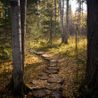 Footpath in wood — Stock Photo