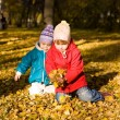 Gathering of autumn leaves 2 — Stock Photo #1359632
