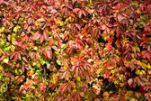 Autumn leaves 3 — Stock Photo