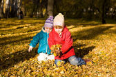 Gathering of autumn leaves 2 — Stock Photo