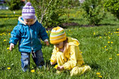 Gathering of dandelions on a glade — Stock Photo