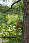 The squirrel — Foto Stock