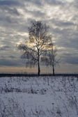 Tree in the field in winter — Stock Photo