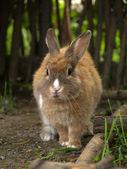 Rabbit — Stock Photo