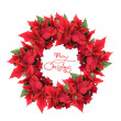 Christmas wreath from poinsettia — 图库照片