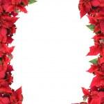 Christmas frame from poinsettias — Stock Photo