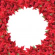 Stock Photo: Christmas frame from poinsettias