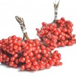 Berries of red Viburnum - Stock Photo