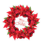 Christmas wreath from poinsettia — Stockfoto