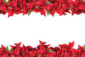 Christmas frame from poinsettias — Stock Photo