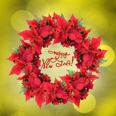 Christmas wreath from poinsettia — Stock Photo