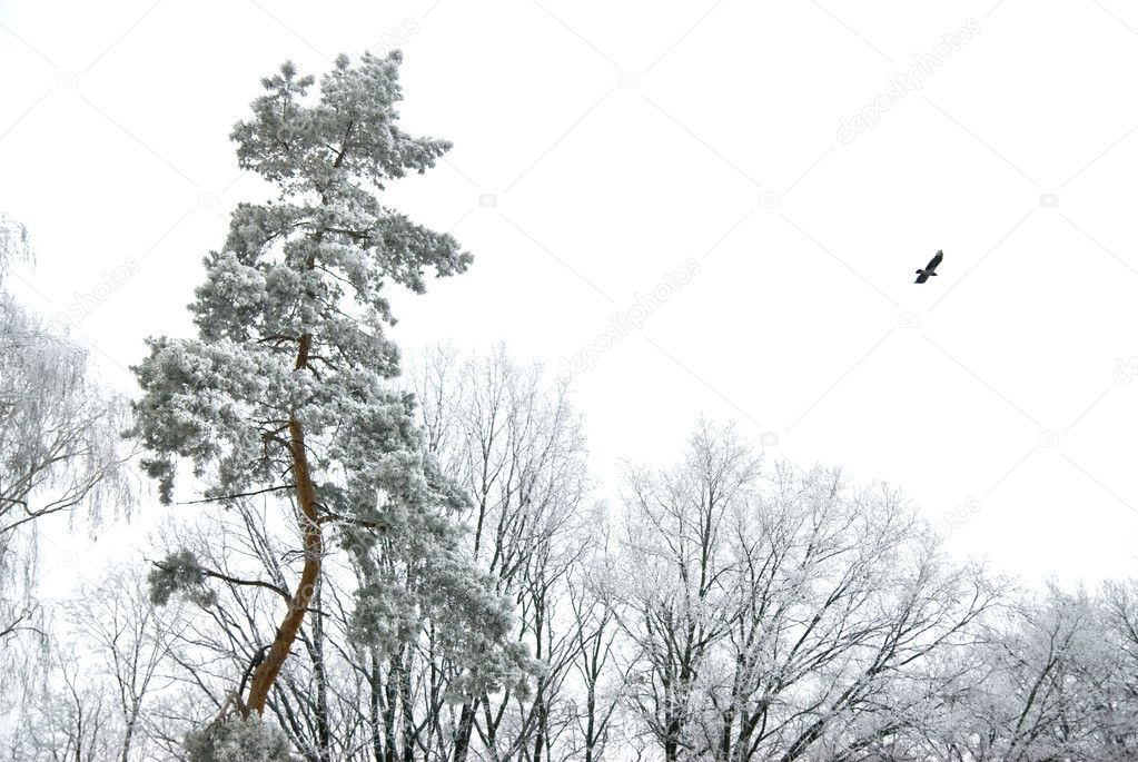Winter forest  Stock Photo #1359736