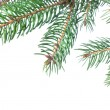 Foto Stock: Branch of christmas fir tree