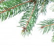 图库照片: Branch of christmas fir tree