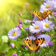 Foto Stock: Two butterfly on flowers