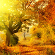 Autumn forest with sun beam - Stok fotoğraf