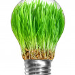 Light bulb with green grass — Stock Photo
