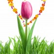 Royalty-Free Stock Photo: Purple tulip and green grass