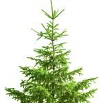 Noel ağacı üzerinde beyaz izole — Stok fotoğraf