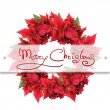 Stock Photo: Christmas wreath from poinsettia