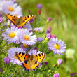 Royalty-Free Stock Photo: Two butterfly on flowers